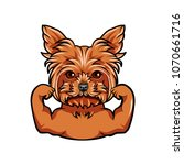 yorkshire terrier dog. muscles. ... | Shutterstock .eps vector #1070661716