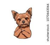 yorkshire terrier dog. middle... | Shutterstock .eps vector #1070663066