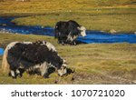 yak on the grassland in tibet... | Shutterstock . vector #1070721020