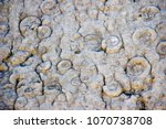 Small photo of Dalle à ammonites in Digne-les-bains, France. A huge stone wall full of ammonites.