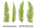 Flat Illustration Of Fern Plan...