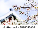 view of the beautiful cherry... | Shutterstock . vector #1070831618