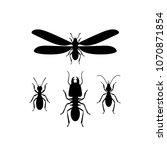 termites  queen  soldier ... | Shutterstock .eps vector #1070871854