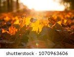 sunlit sun blown foliage in the ... | Shutterstock . vector #1070963606