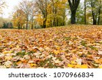 yellow maple foliage with trees ... | Shutterstock . vector #1070966834