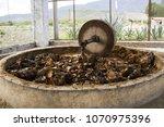 mezcal and tequila distillery... | Shutterstock . vector #1070975396