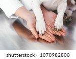 woman holding dogs legs in... | Shutterstock . vector #1070982800