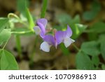 beautiful chin riklijeva.  | Shutterstock . vector #1070986913