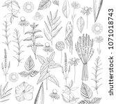herbal plants. plants for...   Shutterstock .eps vector #1071018743