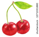watercolor cherries illustration | Shutterstock . vector #1071031880