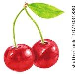 watercolor cherries illustration | Shutterstock . vector #1071031880