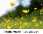 wildflowers | Shutterstock . vector #107108054