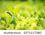 close up shot with selective...   Shutterstock . vector #1071117380