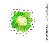 fresh appetizing vegetable for...   Shutterstock .eps vector #1071169220