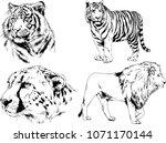 vector drawings sketches... | Shutterstock .eps vector #1071170144