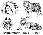 vector drawings sketches... | Shutterstock .eps vector #1071170150