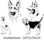 vector drawings sketches... | Shutterstock .eps vector #1071176114