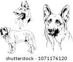 vector drawings sketches... | Shutterstock .eps vector #1071176120