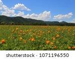 spring landscape. mountain... | Shutterstock . vector #1071196550