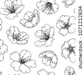 cherry sakura tree flowers... | Shutterstock .eps vector #1071212834
