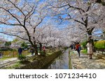 philosopher s path kyoto  ... | Shutterstock . vector #1071234410