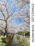 philosopher s path kyoto  ... | Shutterstock . vector #1071234413