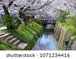 philosopher s path kyoto  ... | Shutterstock . vector #1071234416