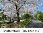 philosopher s path kyoto  ... | Shutterstock . vector #1071234419