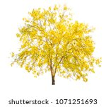 yellow tree  flowers in autumn... | Shutterstock . vector #1071251693
