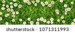 cheerful daisy meadow | Shutterstock . vector #1071311993