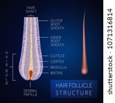 hair bulb under the microscope. ... | Shutterstock .eps vector #1071316814