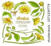 arnica elements vector set | Shutterstock .eps vector #1071339779