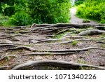 Macro Photography Of Tree Roots....