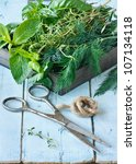 Fresh herbs and old scissors on a blue  board. - stock photo