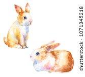 cute little bunny rabbit... | Shutterstock . vector #1071345218