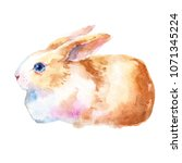 cute little bunny rabbit... | Shutterstock . vector #1071345224