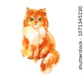 cute little red kitty... | Shutterstock . vector #1071345230