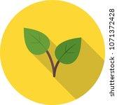 leaves  plant  color | Shutterstock .eps vector #1071372428