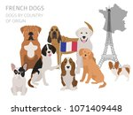 dogs by country of origin.... | Shutterstock .eps vector #1071409448