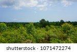 eucalyptus plantation for... | Shutterstock . vector #1071472274