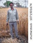 farmer in wheat field crop... | Shutterstock . vector #1071501674
