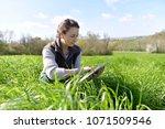 agronomist in crop field using... | Shutterstock . vector #1071509546