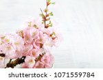 adorable cherry blossom flowers ... | Shutterstock . vector #1071559784