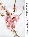 adorable cherry blossom flowers ... | Shutterstock . vector #1071559790