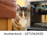 cat in the jungle of furniture | Shutterstock . vector #1071563420