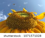 stingless bees are collecting... | Shutterstock . vector #1071571028