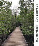 Small photo of Mangrove growing. Cover up the wooden walkway all the way.