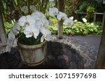 flowers in pot over well in... | Shutterstock . vector #1071597698