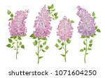 Set Of Lilac Flower Branches On ...