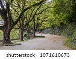 peaceful tree tunnel walk path... | Shutterstock . vector #1071610673
